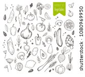 set of hand drawn vegetable.... | Shutterstock .eps vector #1080969950