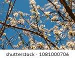 beautiful spring garden     Shutterstock . vector #1081000706