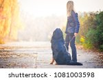 Stock photo bernese mountain dog walking in an autumn park sits on the sidewalk and they look away turning 1081003598