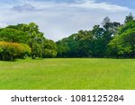 green tree in a beautiful park... | Shutterstock . vector #1081125284