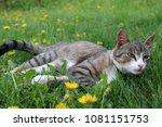 A Cat Kitten Lying On A Grass...