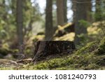 Tree stump in a bright and...
