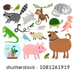 Stock vector pets animals cartoon home animals vector illustration for animal shop like budgie and gerbil 1081261919