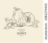 quince  fruit  flower  leaves... | Shutterstock .eps vector #1081274453