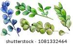 green boxwood leaf. leaf plant... | Shutterstock . vector #1081332464