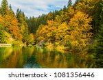 fantastically beautiful autumn...   Shutterstock . vector #1081356446