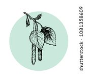 hand drawn birch branch with... | Shutterstock .eps vector #1081358609