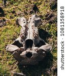 Small photo of Old hippo scull on the ground