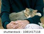 cat sleeping on owner's lap.   Shutterstock . vector #1081417118