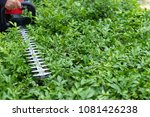 home and garden concept. hedge... | Shutterstock . vector #1081426238