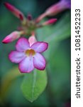 flower at garden botany bay ...   Shutterstock . vector #1081452233