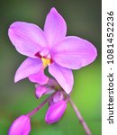 flower at garden botany bay ...   Shutterstock . vector #1081452236