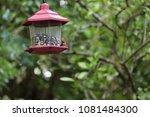 female northern cardinal... | Shutterstock . vector #1081484300