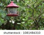 female northern cardinal... | Shutterstock . vector #1081486310