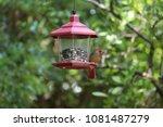 female northern cardinal...   Shutterstock . vector #1081487279