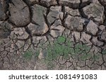 grass on cracked ground | Shutterstock . vector #1081491083