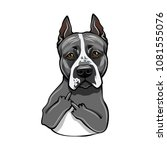 staffordshire terrier dog.... | Shutterstock .eps vector #1081555076