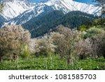 gardens of blooming apples in... | Shutterstock . vector #1081585703