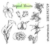 tropical flowers hand drawn...   Shutterstock .eps vector #1081592729