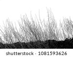 realistic grass silhouettes ... | Shutterstock . vector #1081593626