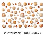 pattern made of shells and... | Shutterstock . vector #1081633679