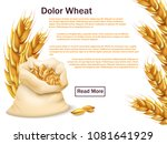 realistic wheat  grains and... | Shutterstock .eps vector #1081641929