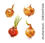 set of watercolor onion... | Shutterstock . vector #1081645166