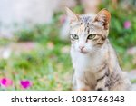 Small photo of cute cate yes expression with blured background selective focus