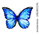 beautiful blue butterfly... | Shutterstock . vector #1081802150