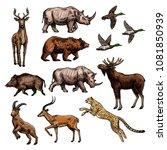 wild animal and bird sketch set.... | Shutterstock .eps vector #1081850939