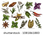 spice  herb and green leaf... | Shutterstock .eps vector #1081861883