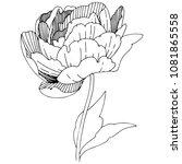 wildflower peonies flower in a... | Shutterstock .eps vector #1081865558