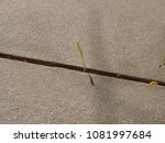 Small photo of A Single Blade - Grass - A single blade of grass poking up out of the crack in a sidewalk