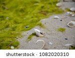 seashell on the sand close up ...   Shutterstock . vector #1082020310