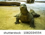 the komodo dragon also known as ... | Shutterstock . vector #1082034554