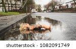 plastic doll left abandoned in... | Shutterstock . vector #1082091749