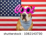 Stock photo american independence day concept staffordshire terrier dog stars and stripes flag in studio 1082143730
