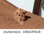 close up of a mud dauber wasp... | Shutterstock . vector #1082195618