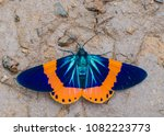 Beautiful Moth Orange And Blue...