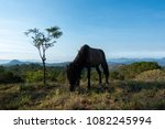 A horse eating grass on the hill. High-quality free stock image of the alone horse on a mountain in the morning