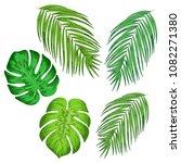 green palm leaves set  hand... | Shutterstock .eps vector #1082271380