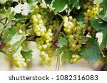 winery at countryside between... | Shutterstock . vector #1082316083