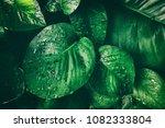rain drop on tropical leaf | Shutterstock . vector #1082333804
