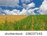 Colorful Corn And Wheat Fields...