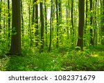 beautiful forest landscape in... | Shutterstock . vector #1082371679