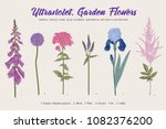 set garden flowers. classical... | Shutterstock .eps vector #1082376200