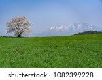 solitary cherry blossom in a... | Shutterstock . vector #1082399228