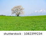 solitary cherry blossom in a... | Shutterstock . vector #1082399234