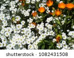 wild flowers meadow | Shutterstock . vector #1082431508