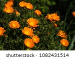 wild flowers meadow | Shutterstock . vector #1082431514